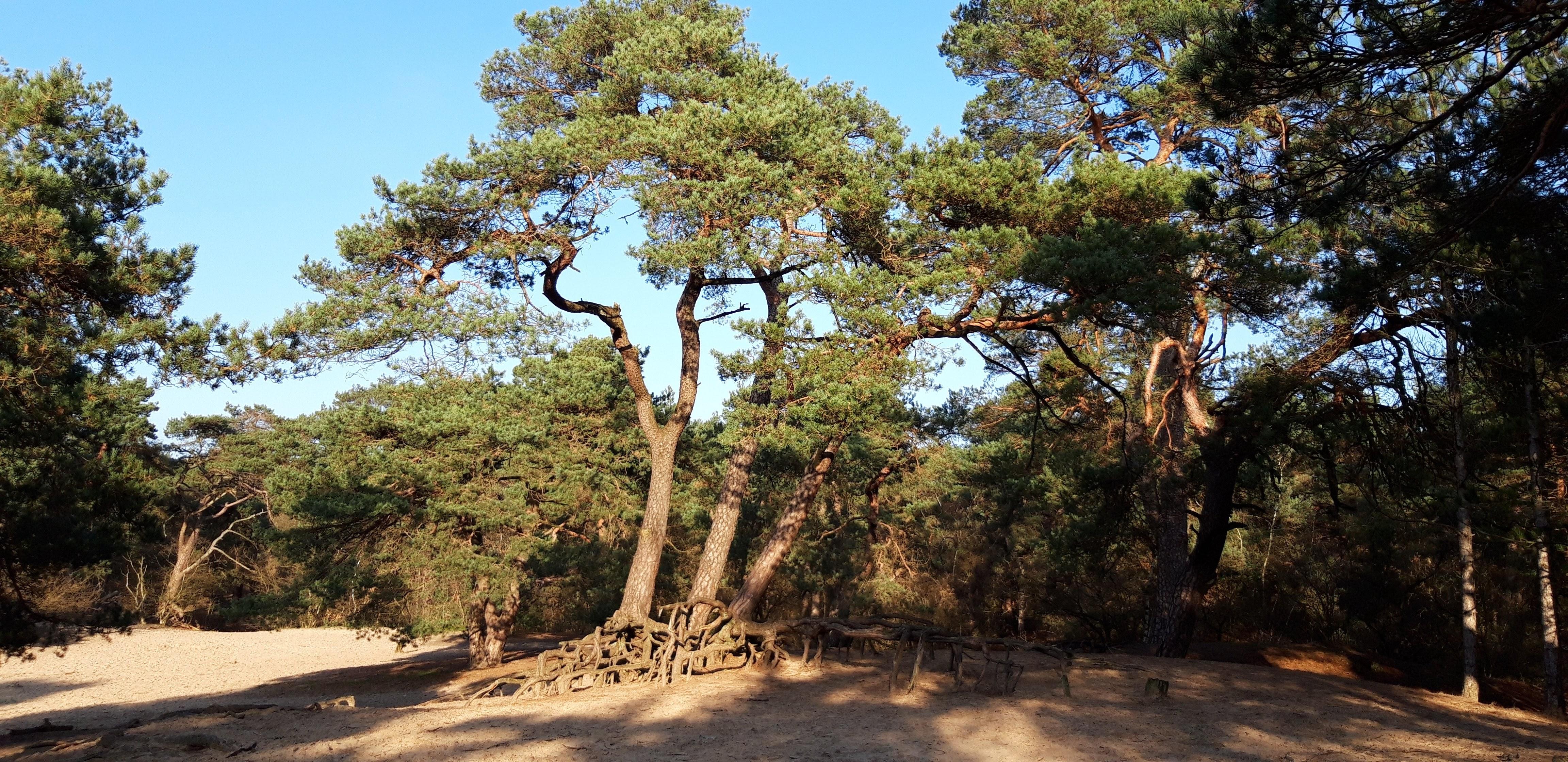 Landgoed Beerschoten, Houdringe en het Panbos